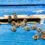 Bee Control in Winston-Salem, North Carolina