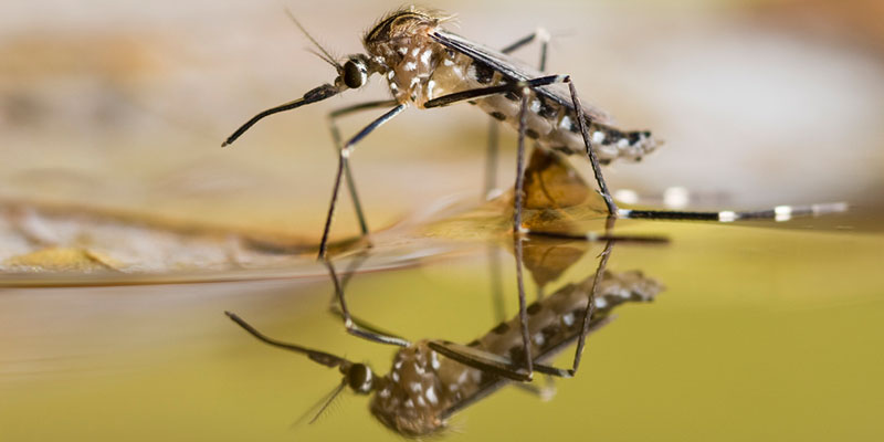 Expert Tips for Effective Mosquito Control