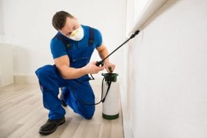 3 Qualities of a Great Exterminator